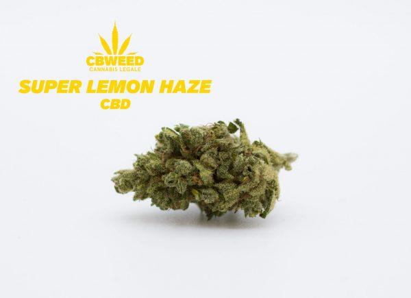 Super-Lemon-haze-Web