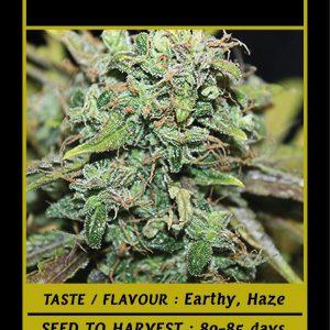Προϊόντα κάνναβης | Σπόροι, ανθοί, έλαια | Tsiou Seeds | Cannabis Store