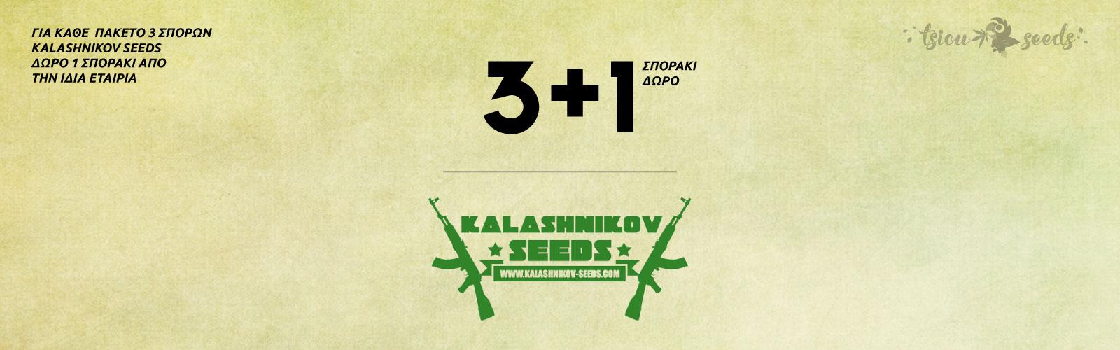 Kalashnikov-Seeds-Offer