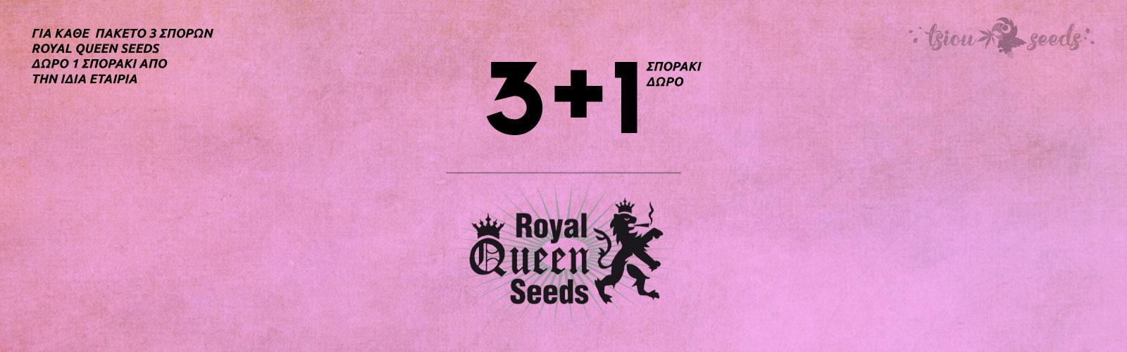 Royal-Queen-Seeds-Offer
