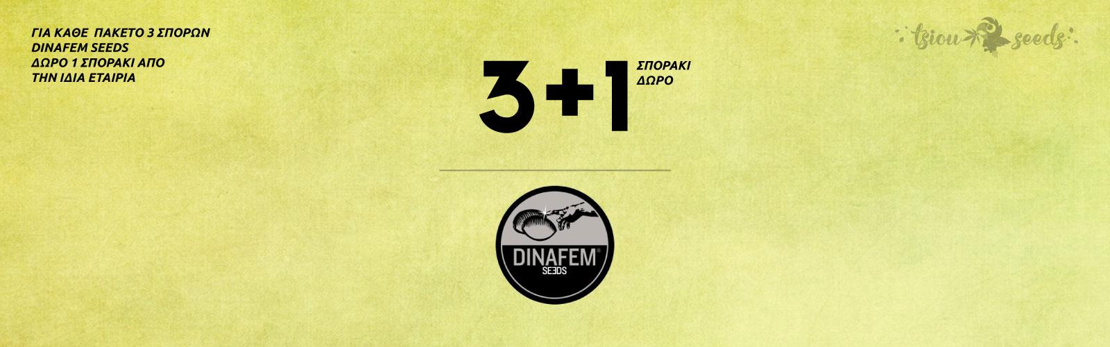 Dinafem-Offer