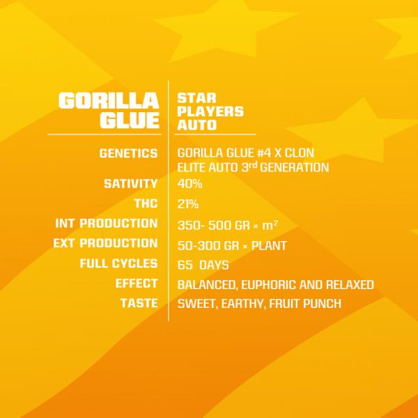 GORILLA-GLUE-1