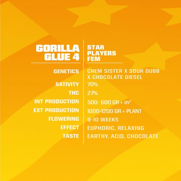 GORILLA-GLUE-4-1