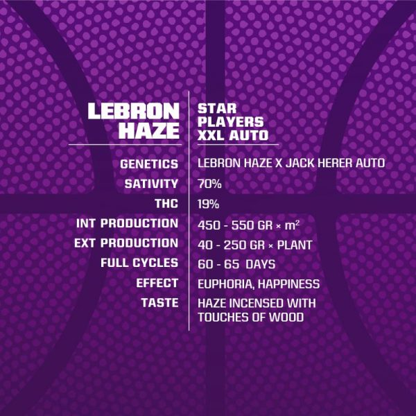 LEBRON-HAZE-XXL