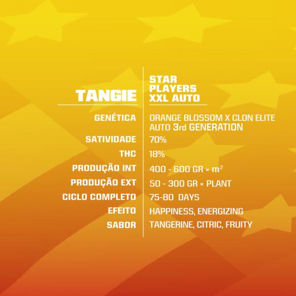 TANGIE-XXL